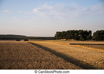 harvest time - field and meadows in august (harvest time)