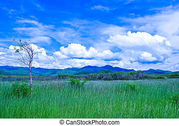 Field and mountain range near Trinidad, Cuba
