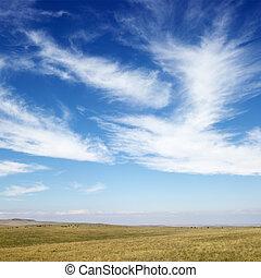 Field and sky. - Sky scene of golden field and wispy cirrus ...