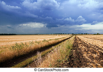 field and stormy skies - field and the dirt road. stormy...