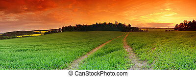 Field and sunset - Beautiful landscape panorama with green...