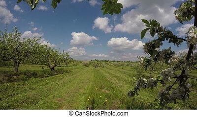 Field apple-trees industrial garden
