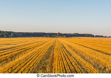 Field at a farm in the summer