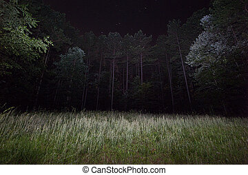 Field at Night - A long exposure with flashlight light...