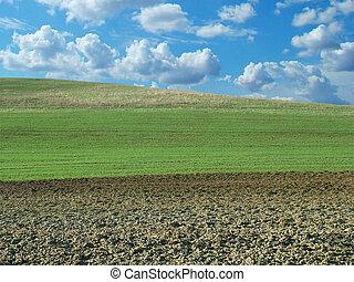 Field at spring