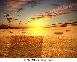 Field at sunset