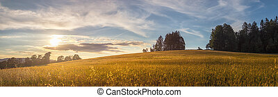 field at sunset - summer evening in the countryside