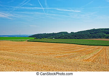 Field at Yverdon in Jura Nord Vaudois Vaud Switzerland -...