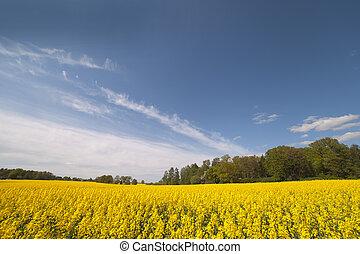 field., canola