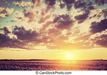 Field, countryside at sunset. Harvest time. Vintage