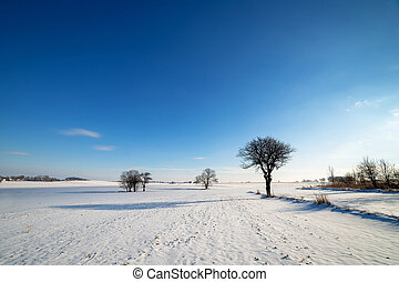 Field covered with snow with a blue sky in the background