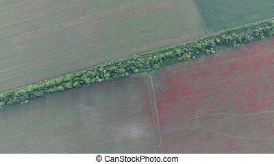 field crops bird's-eye view - Aerial. crops and poppy field...