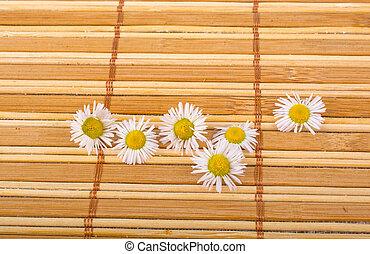 Field daisy flower on bamboo