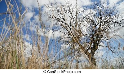 field dry grass lonely in the field on tree a background of blue sky autumn nature