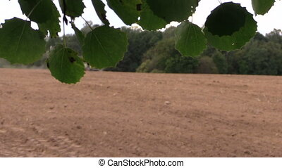 field fertilize tree leaf - Tree leaves move in wind and...