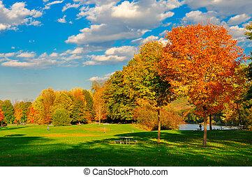field., feuillage, automne