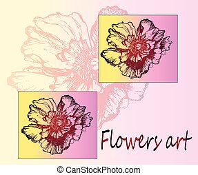 Field flower poppies. Detailed sketch of the plant.