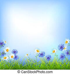 Field flowers daisy cornflower grass background