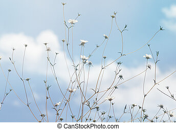field flowers on a background of blue sky with clouds