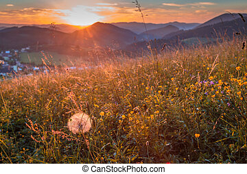 Field flowers on a meadow in the foreground of rural landscape.