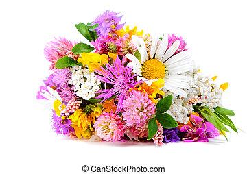 Field flowers on white