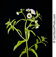 field flowers on a black background