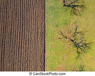 field for agriculture in the village. Aerial view