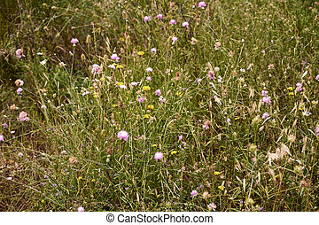 Field full of herbs and flowers