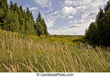 Field grass and flowers landscape