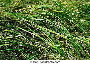 Field grass background