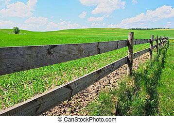 Field - Green feld in village Poland