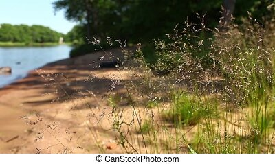 field herb - HD1080: picturesque place on the shore of the...