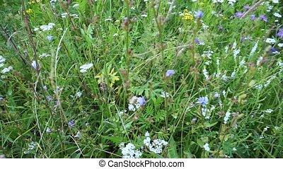 field., herbe, floraison, meadow., fleurir, en mouvement, ...