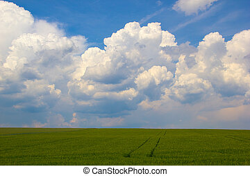 field in front of clouds