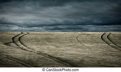 Field In Strong Wind With Dramatic Sky