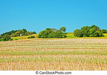 Field in Yverdon in Jura Nord Vaudois Vaud Switzerland -...