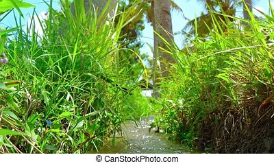 field., irrigation, vidéo, 4k, canal, riz