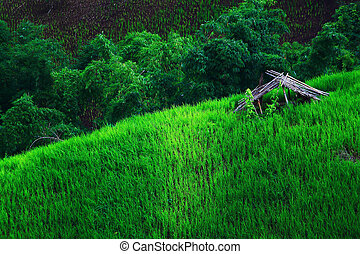 field landscape 2