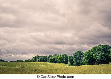 Field landscape with cloudy weater - Green field landscape...
