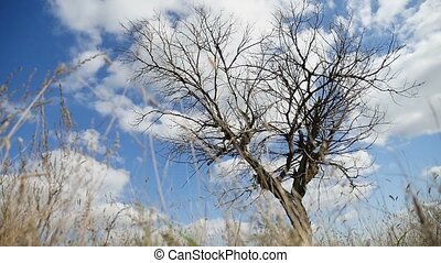 field lonely dry grass in the field on tree a background of blue sky autumn nature