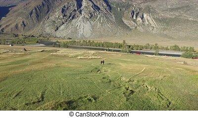 Field near river