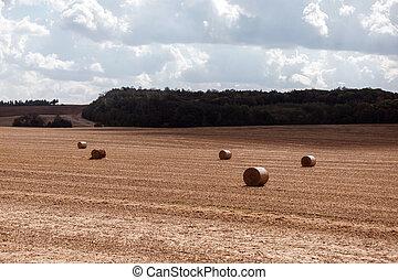 field., nebe, strniště, bojiště, po, clouds., sklízet, pohroma, maličkost