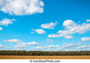 field oats on a background of forest and sky
