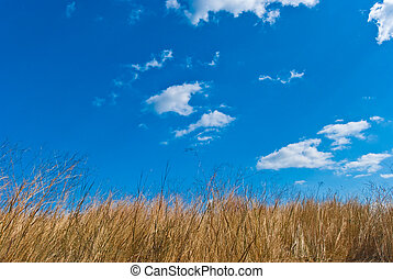 Field of a grass against the blue sky with white clouds