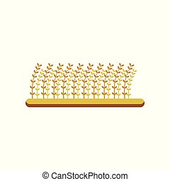 Field of barley, design element for brewing industry vector Illustration on a white background