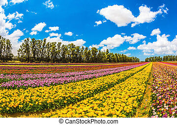 Field of beautiful flowers