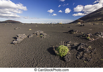 field of black volcanic sand with few vegetation