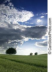 Field of buckwheat.