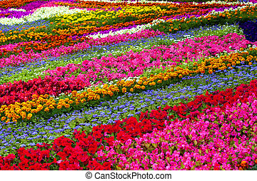 Field of different flowers