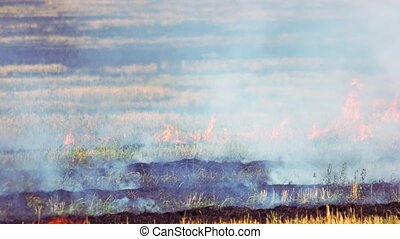 Field of dry and fresh grass burning out. Wild fire outdoor ...